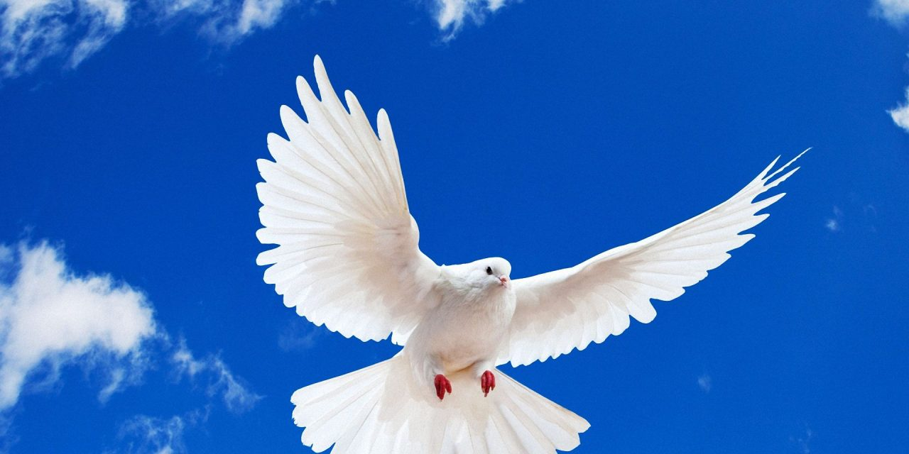 Does the Holy Spirit Convict A Believer? - The Bereans